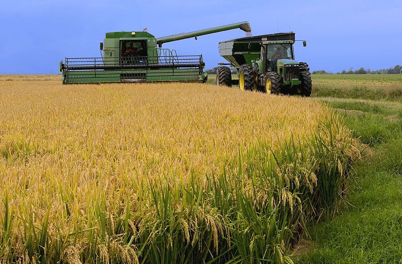 EVFTA opens door to Vietnam's agricultural product